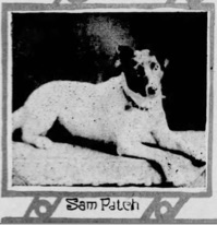 Photo of Sam Patch from the Scranton Republican, February 25, 1906